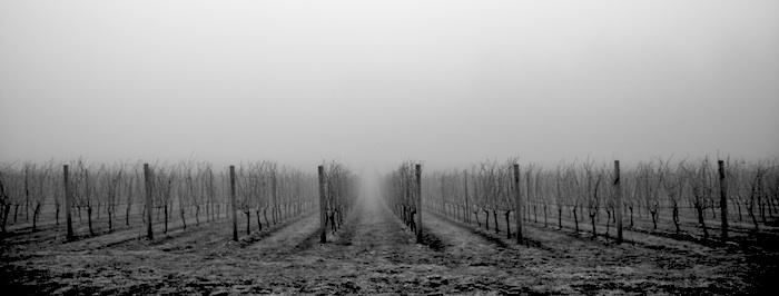 Dundee_wine_pano
